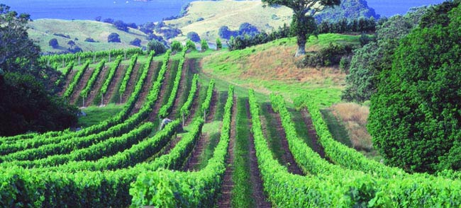Wineries Tours
